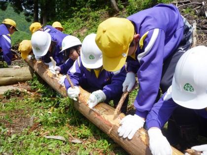 スギの間伐材の皮むき