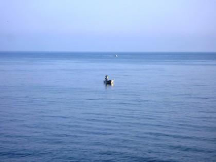 大海原でワカメ採り