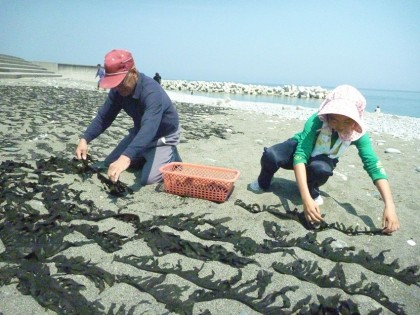 砂利の浜辺に並べて乾燥
